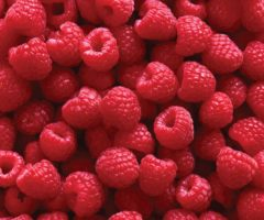 A large amount of picked raspberries.
