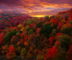Fall foliage in the Blue Ridge Parkway during sunset.