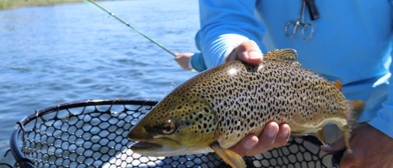 A person holding a recently caught brown trout.