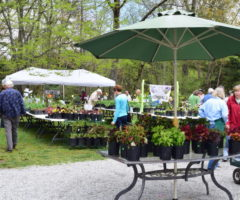An outdoor plant sale at Bullington Gardens.