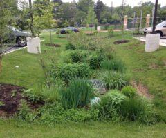A rain garden built between two parking lots.