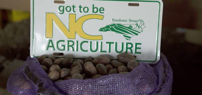 "Pecans below a ""Got to be NC"" sign."