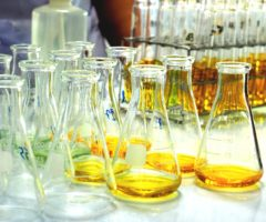 Yellow fluids in several lab beakers.