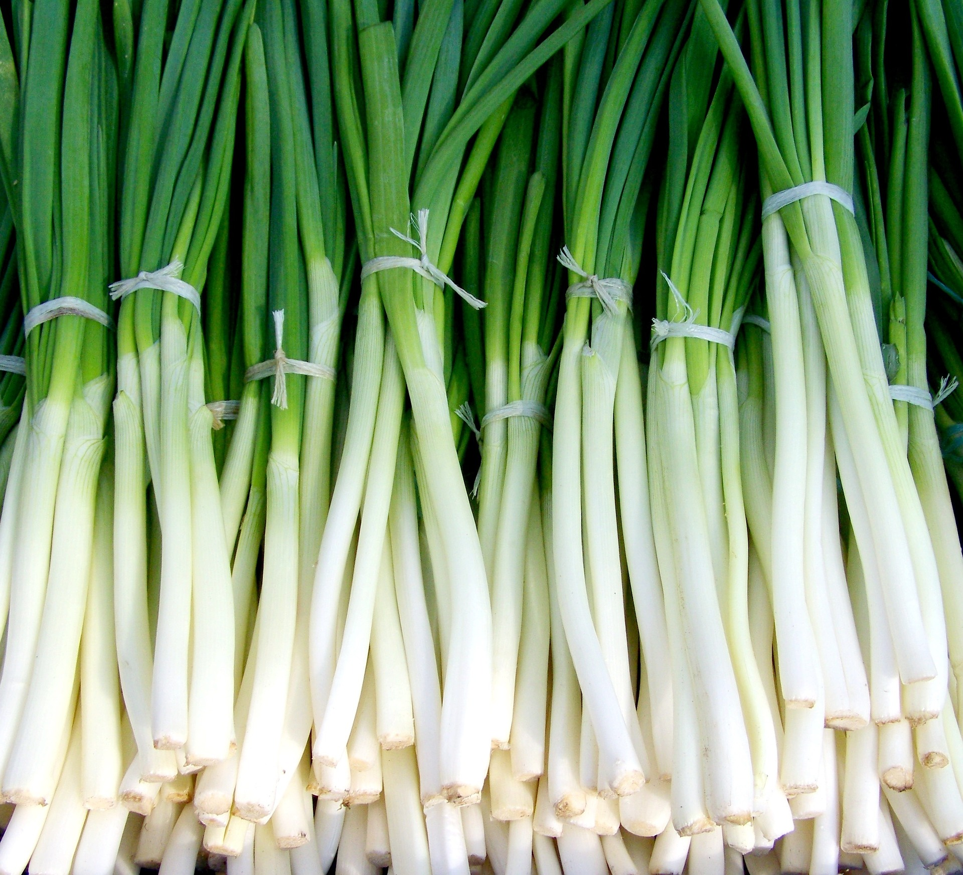 Bunches of green onions on a table.