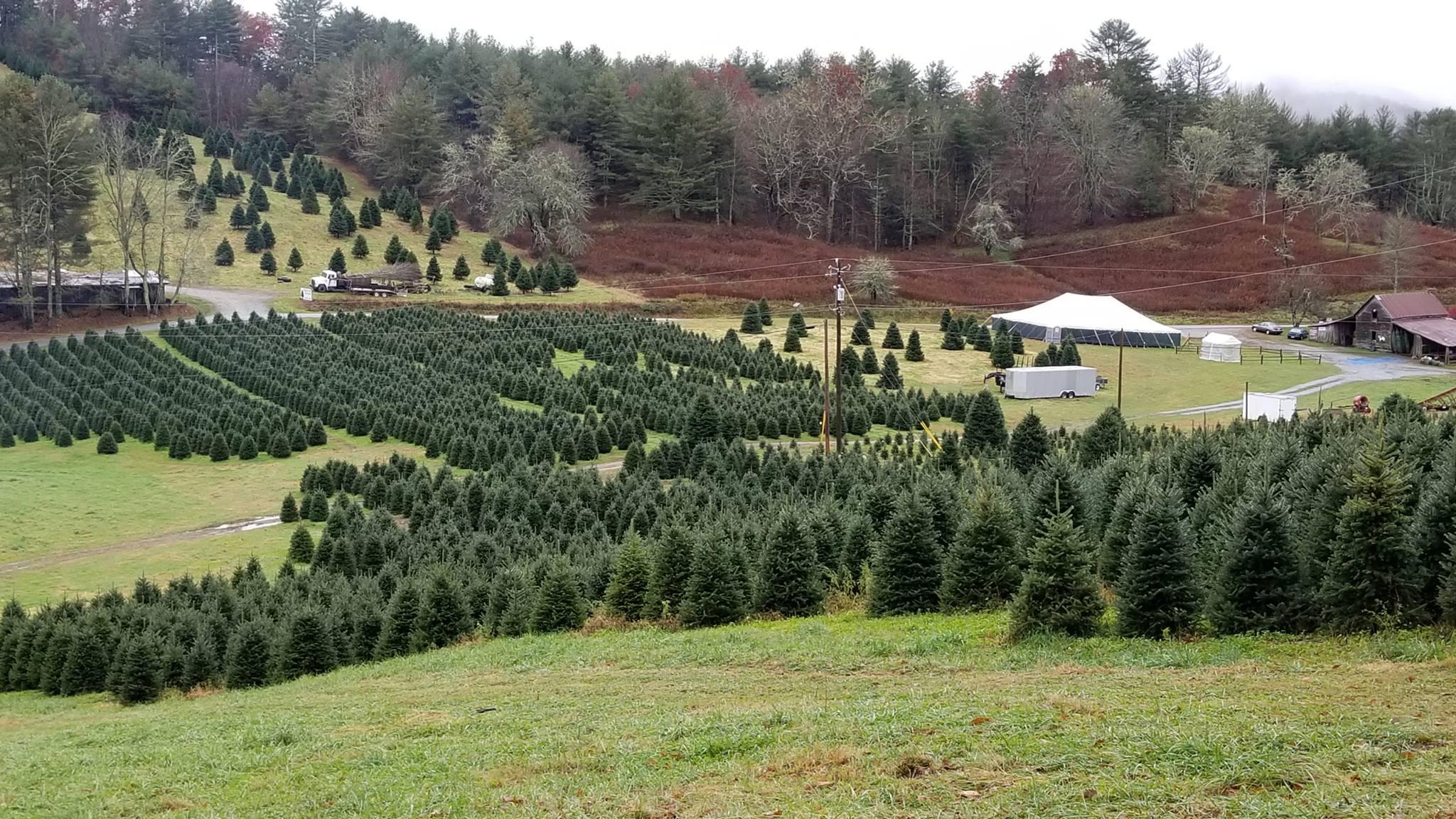 Tom Sawyer S Christmas Tree Farm And Elf Village Hendersonville Com