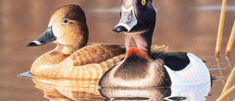 Klinefelter's award-winning painting features a pair of ring-necked ducks.
