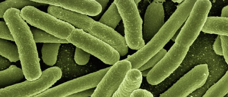 A rendering of dangerous bacteria with a green hue.