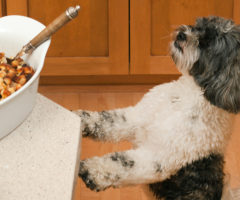 A dog leaping up to the ledge of a table with food.