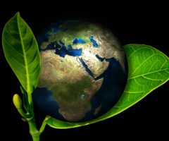 An illustration of the earth and green leaves.