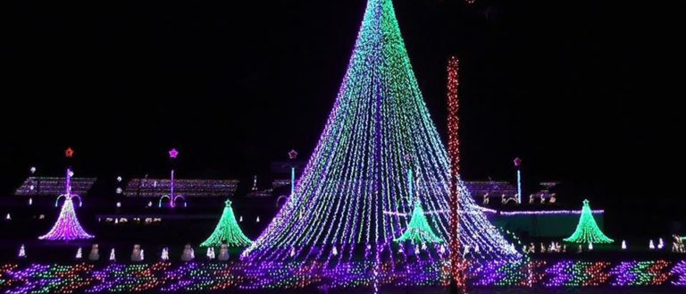 A giant tree covered in thousands of lights.