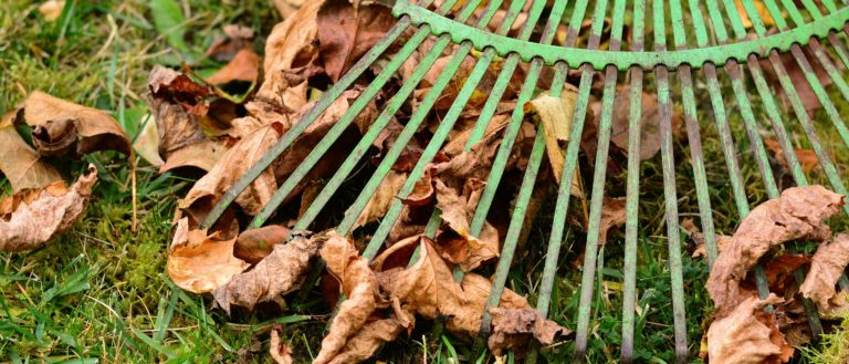 A rake on top of some dead fallen leaves.