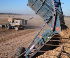 Tractors harvesting peanuts on a field.