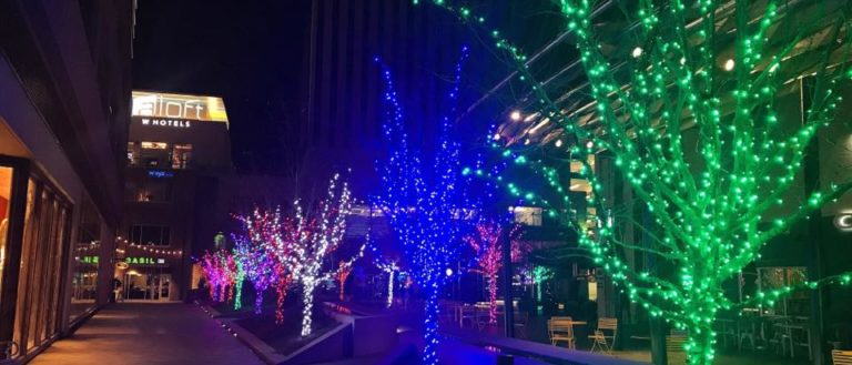 A row of trees lit for the holidays.