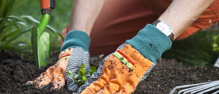 A gardener handling soil.