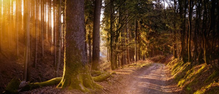 A path going through a forest.