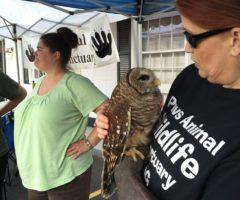 A PAWS volunteer holding an owl.
