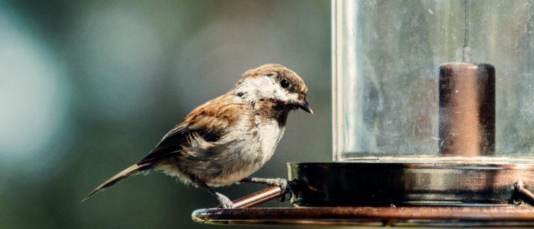 A bird sitting on a bird feeder.