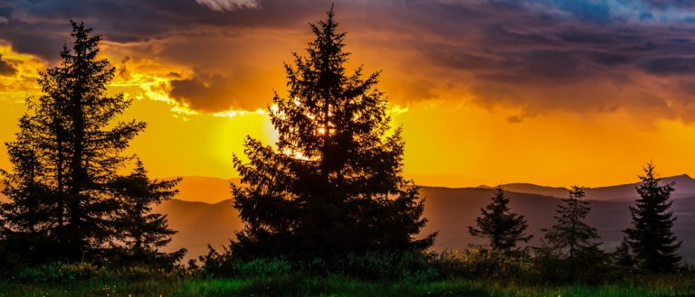 Trees in front of an orange sunset.